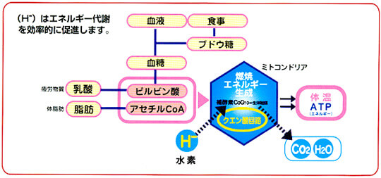 水素は生命エネルギー